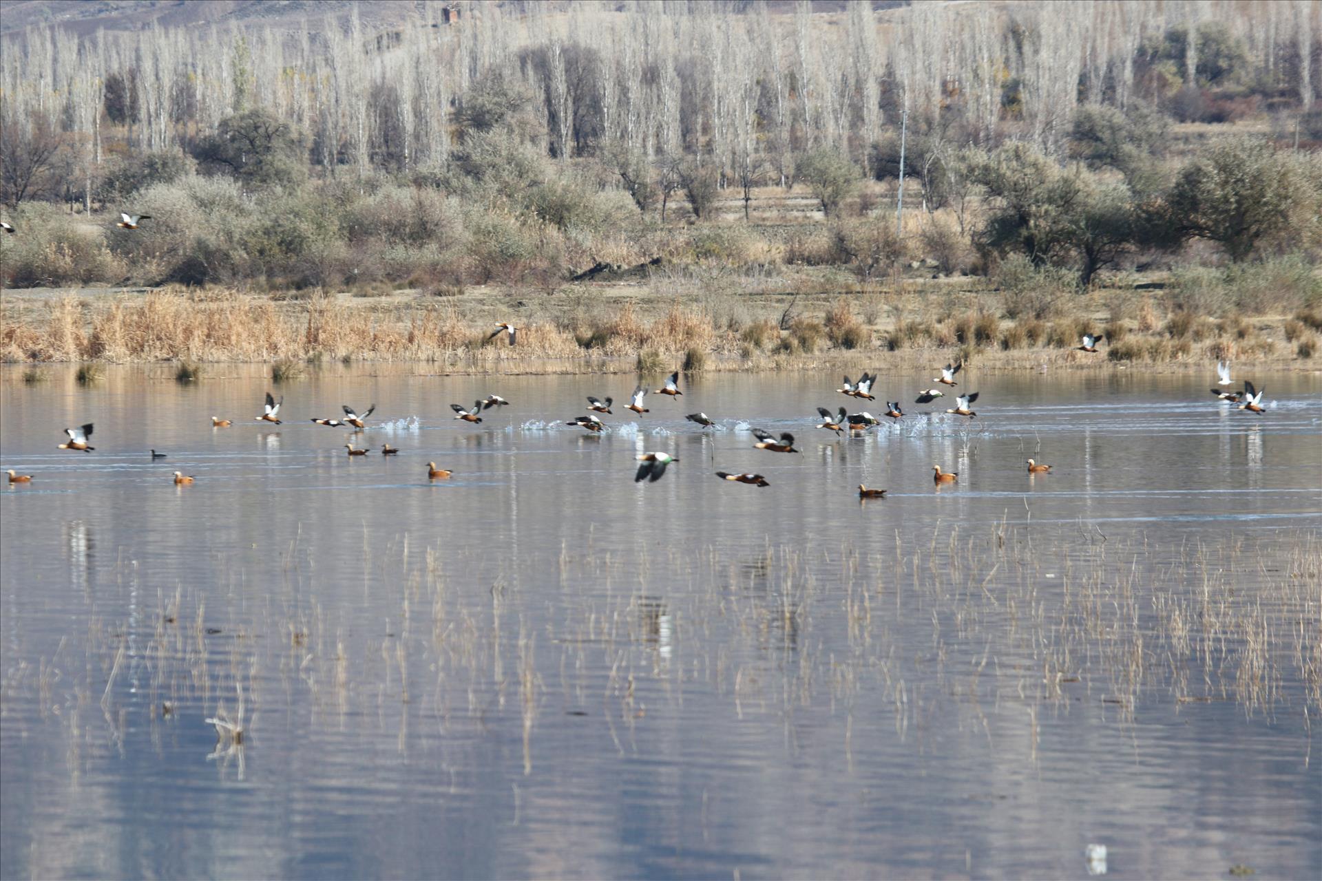 Türkiye'nin Yeni Kuş Cenneti: Obruk Barajı